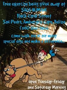Saga dog walking photo